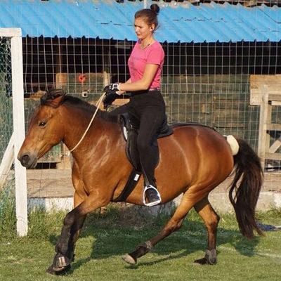 pferd-lazyhorse