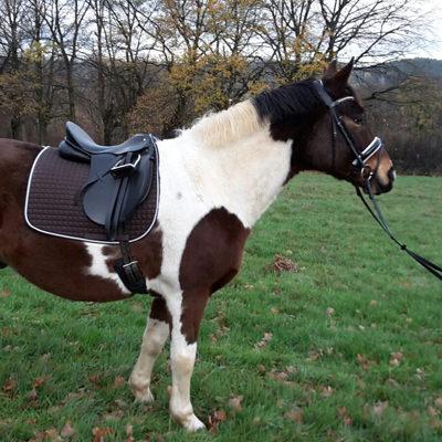 pferd-bajan